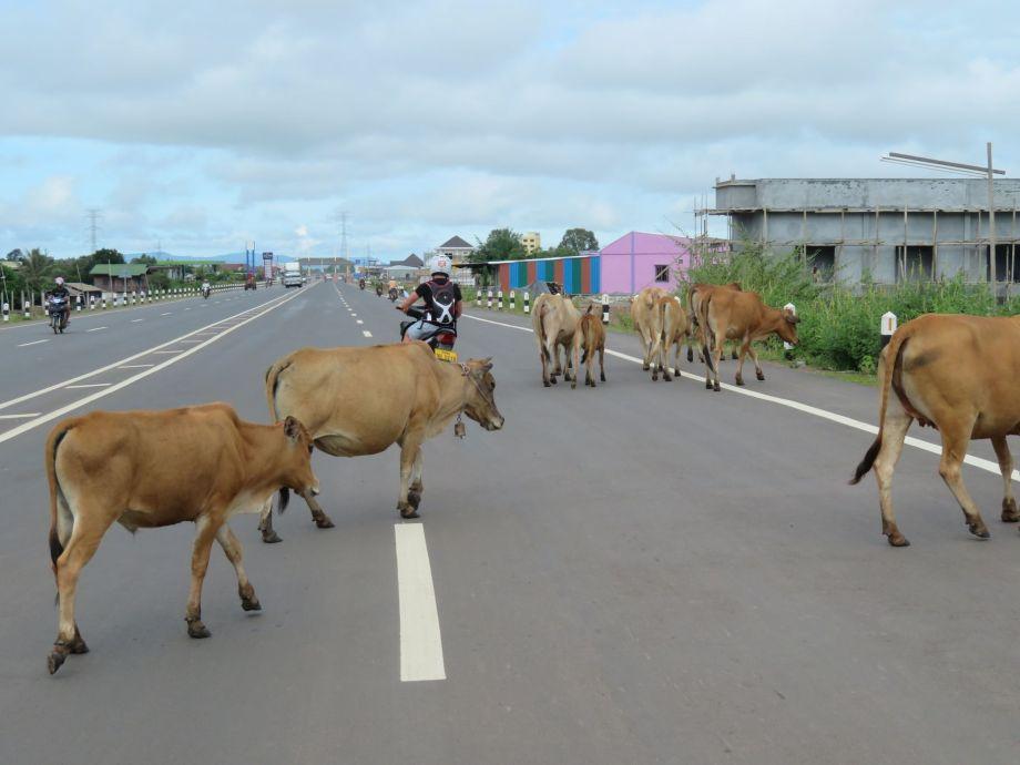 sur la route de Champassak (1)